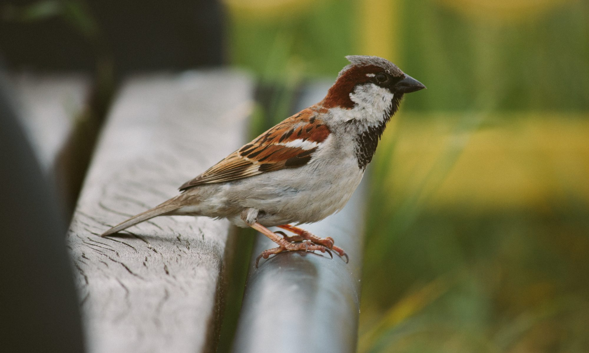 portrait of a sparrow representing the sparrow aspect of this st. paul boudoir photorapher